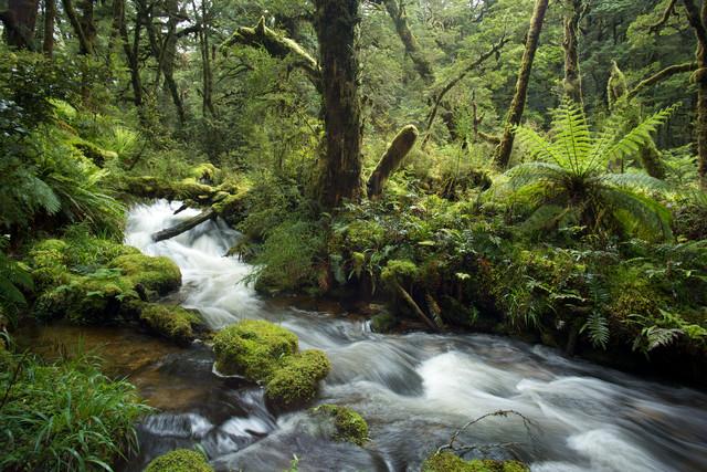 Moose, Farne und Wasser im Regenwald von Neuseeland - fotokunst von Stefan Blawath