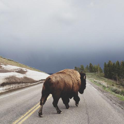 Street Bison - fotokunst von Kevin Russ