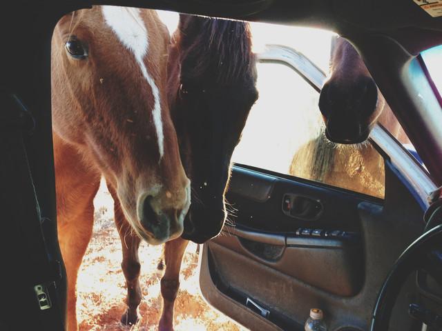 Curious Horses - fotokunst von Kevin Russ