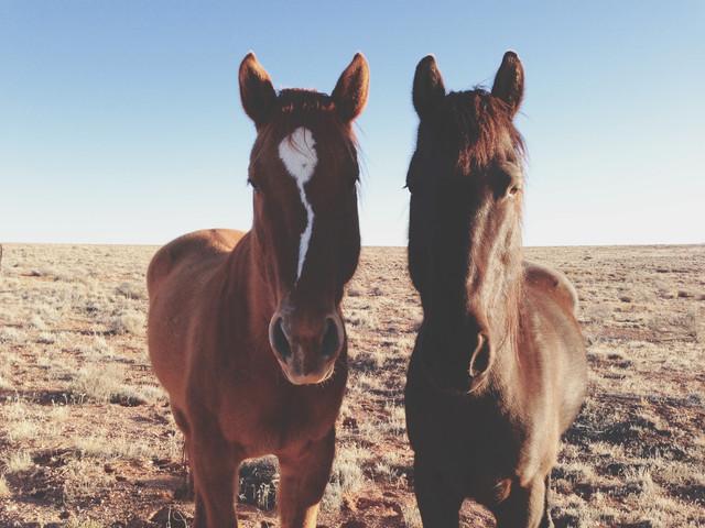 Horse Friends - fotokunst von Kevin Russ