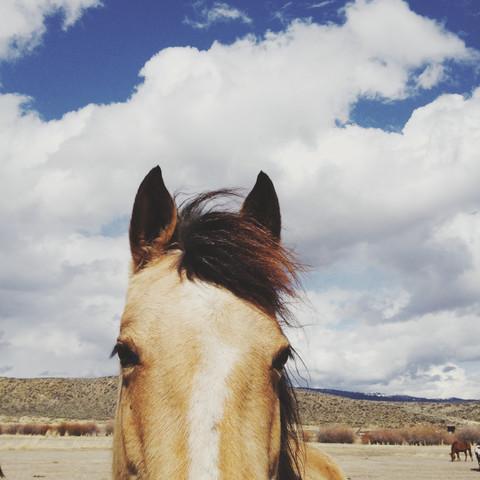 Cloudy Horse Head - fotokunst von Kevin Russ