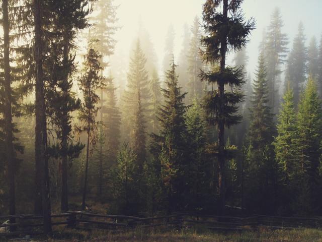 Sunrise Forest - fotokunst von Kevin Russ