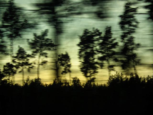 treescape - fotokunst von Christiane Wilke