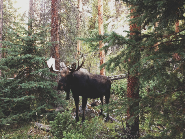 Modest Moose - fotokunst von Kevin Russ