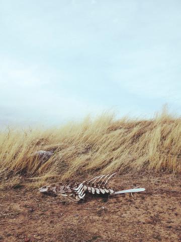 Winded Skeleton - fotokunst von Kevin Russ
