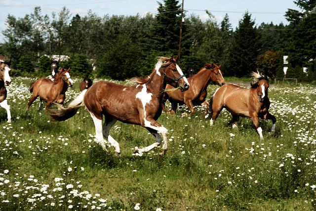 Spring Horse Run - fotokunst von Kevin Russ