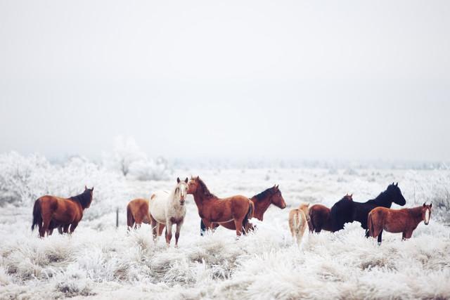 Winter Horseland - fotokunst von Kevin Russ