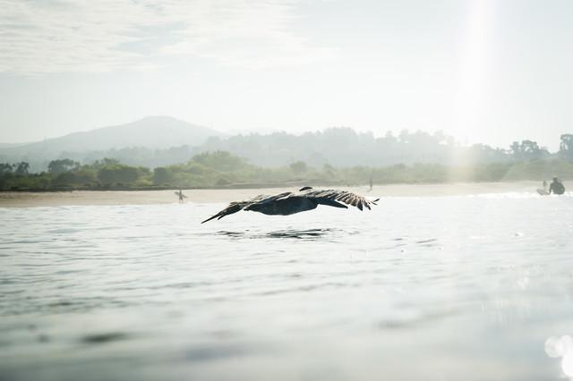 Pelikan - fotokunst von Lars Jacobsen