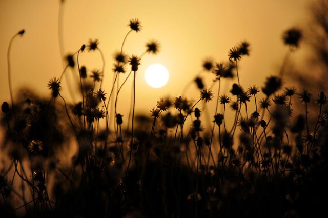 The beginning of a new day - fotokunst von Sankar Sarkar