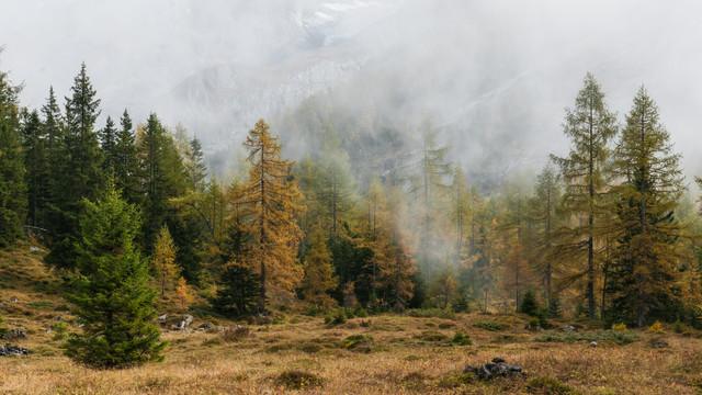 Mystischer Wald - fotokunst von Rainer Kohlrusch
