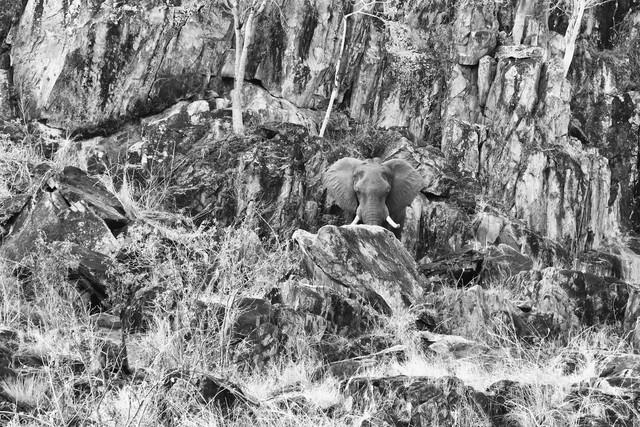Felsen Elefant - fotokunst von Angelika Stern