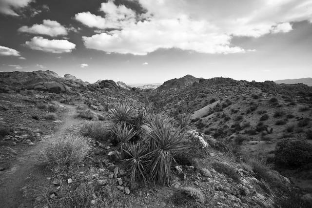 Joshua Tree National Park - fotokunst von Jakob Berr