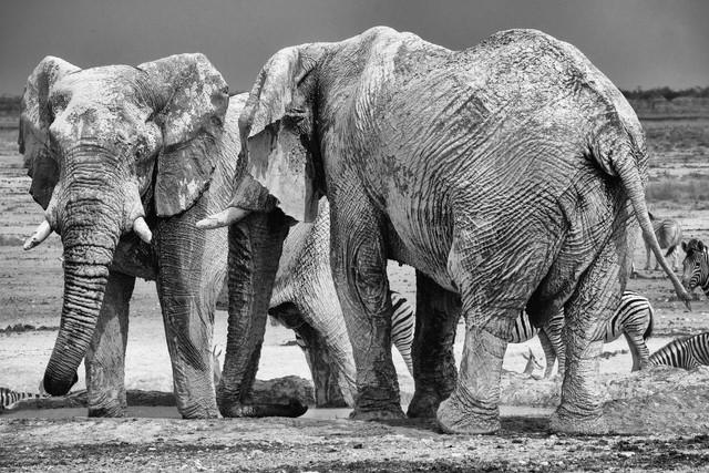 Elefanten beim Schlammbad im Etosha National Park - fotokunst von Dennis Wehrmann