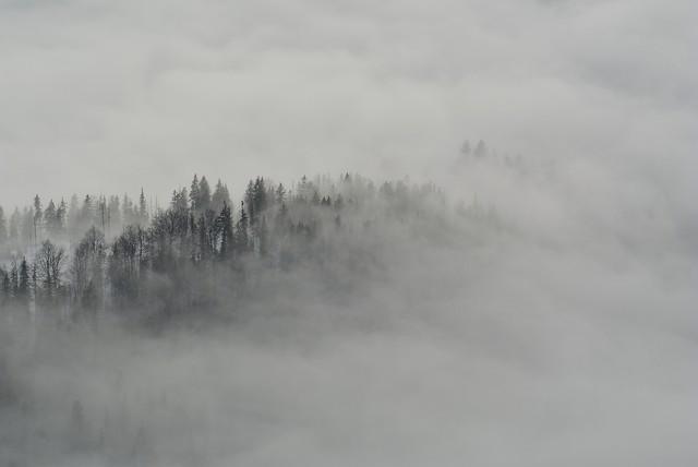 Der Nebel - fotokunst von Sascha Hoffmann-Wacker