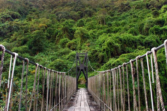 In den Regenwald - fotokunst von Thomas Heinze