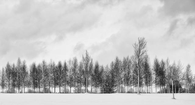 winter trees - fotokunst von Jochen Fischer