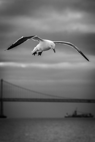Seagull at the Golden Gate Bridge - fotokunst von Jörg Faißt