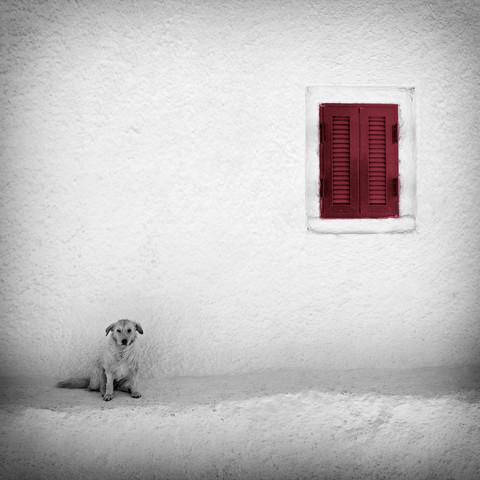 Lonely Dog - fotokunst von Carsten Meyerdierks