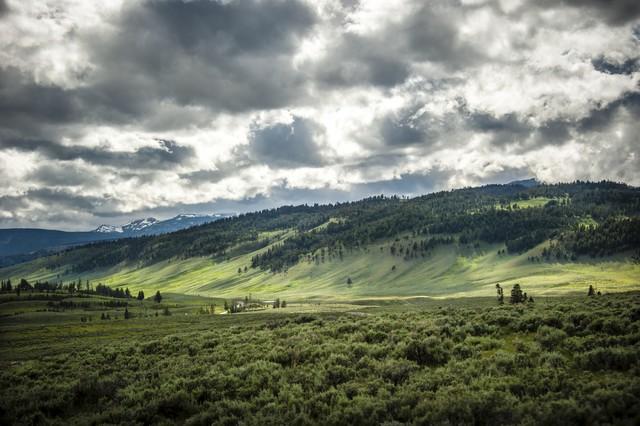 Yellowstone National Park #02 - fotokunst von Michael Stein