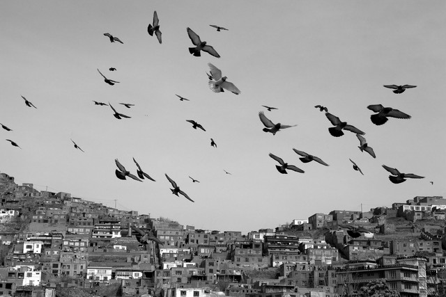 Freedom birds in Kabul - fotokunst von Christina Feldt