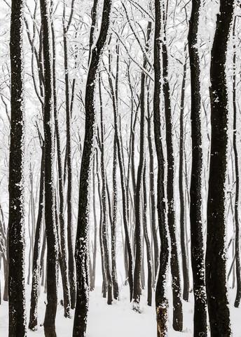 monochrome Eiszeit II - fotokunst von Heiko Gerlicher