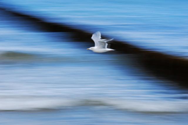 im Flug - fotokunst von Alexander Barth