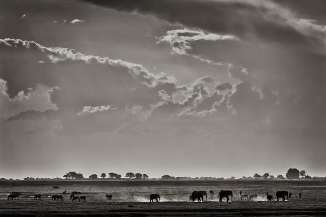 Elefants at Ihaha - Botswana - fotokunst von Franzel Drepper