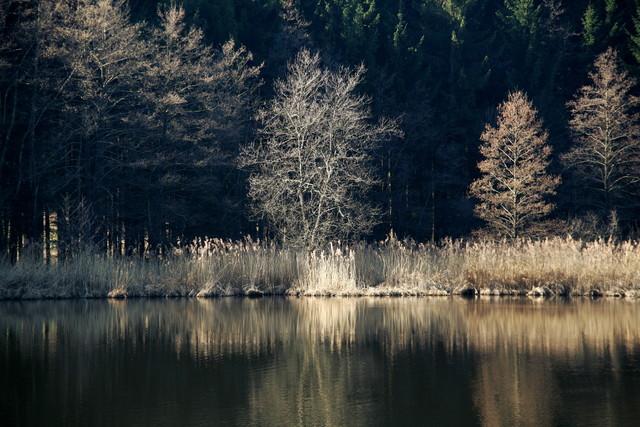Waldsee 2 - fotokunst von Ernst Pini