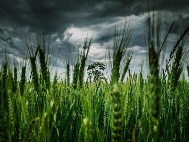 The Storm - fotokunst von Greg Hogan