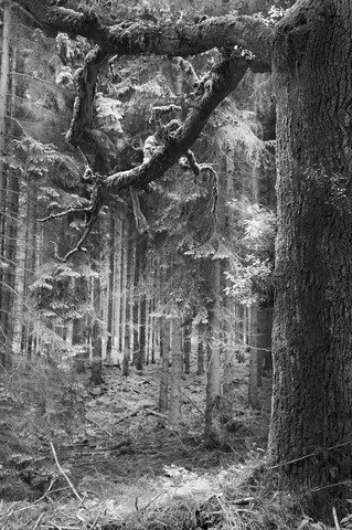 haunted forest - fotokunst von Andreas Odersky