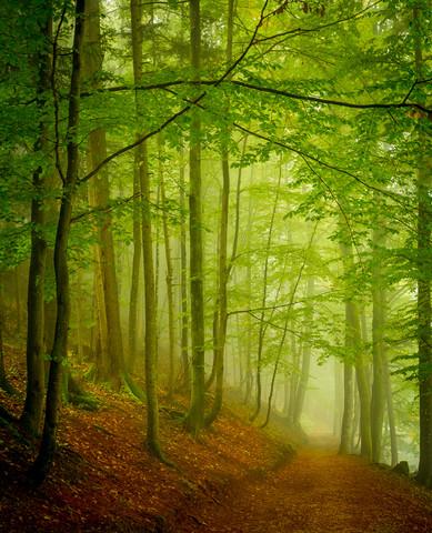 Nebelstimmung - fotokunst von Torsten Muehlbacher