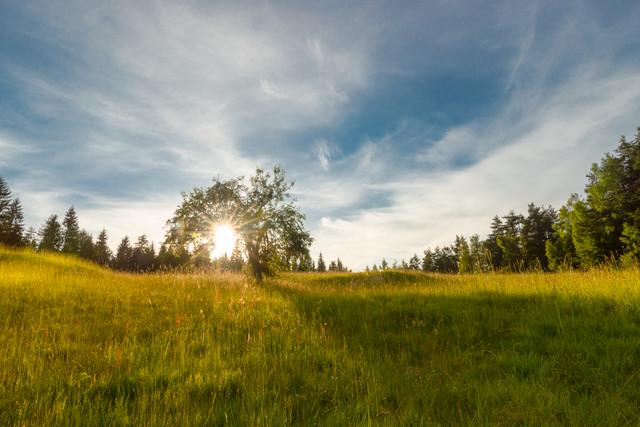 Hello Sunshine - fotokunst von Manuel Ferlitsch