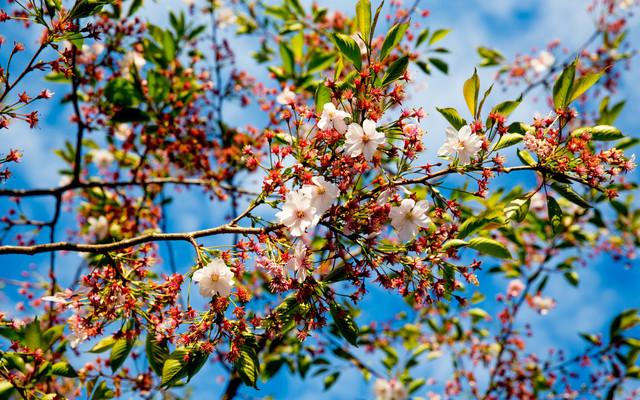 Frühlingszeit - fotokunst von Torsten Muehlbacher