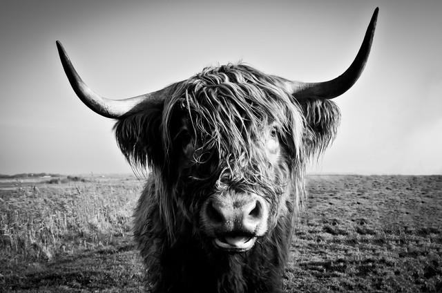 Bulle - fotokunst von Gregor Ingenhoven