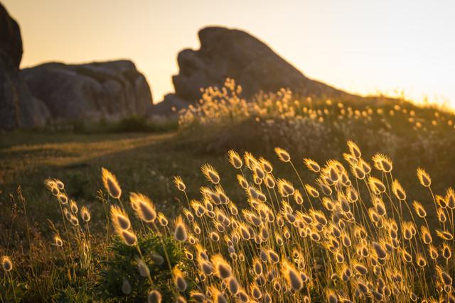 Gräser im Abendlicht - fotokunst von Monika Schwager