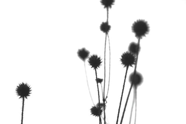 Plants #7 - fotokunst von Sandra Fritz