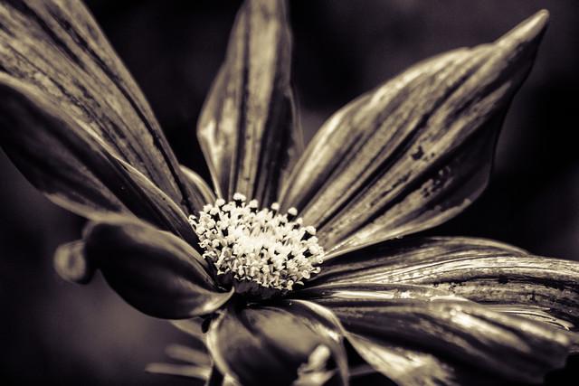 The blossom - fotokunst von Markus Landsmann