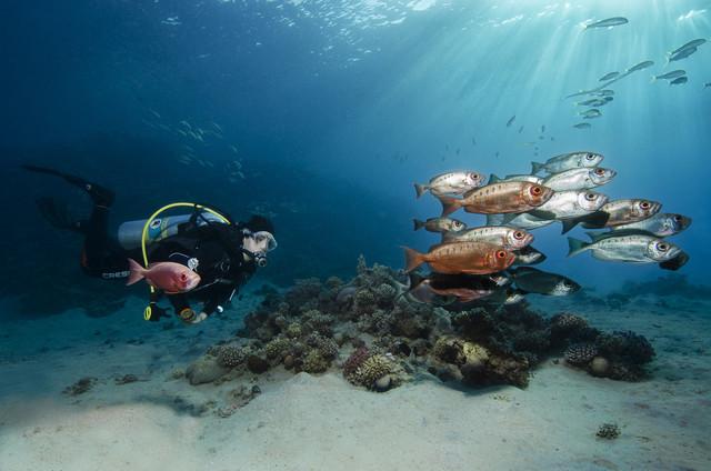 Just diving - fotokunst von Christian Schlamann