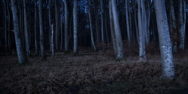 Buchenwald - fotokunst von Florian Nessler