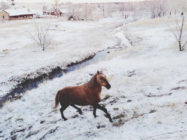 Winter Farm Horse - fotokunst von Kevin Russ