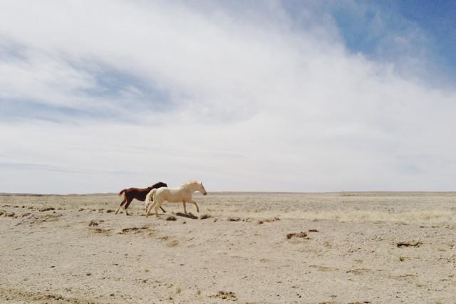 Horses Run in the Wild - fotokunst von Kevin Russ