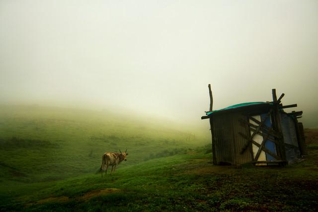 The Horny Mist - fotokunst von Siddharthan Raman