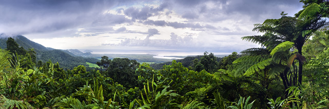 Daintree forest cape tribulation - fotokunst von Franzel Drepper