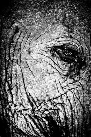 Eye contact - fotokunst von Nicole Cambré