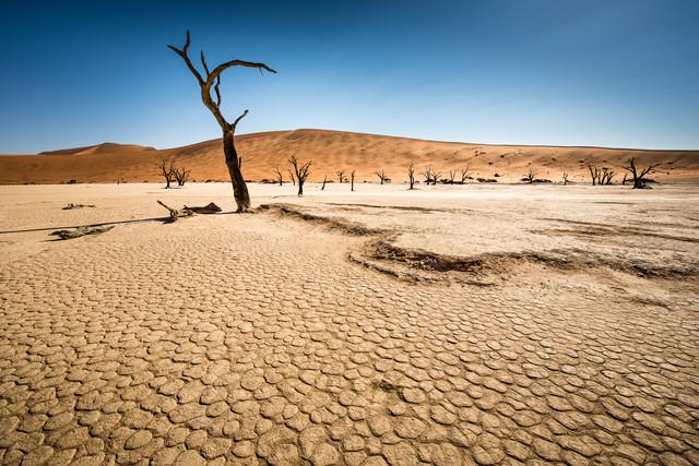 Dead Trees in Dead Vlei #01 - fotokunst von Michael Stein