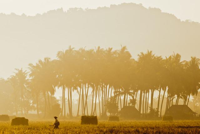 Golden Walk - fotokunst von Marc Rasmus