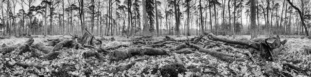 Unterholz - fotokunst von Jan Benz