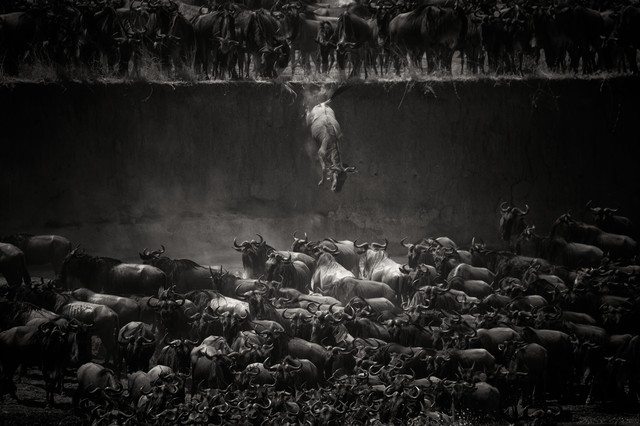 The Great Migration - fotokunst von Nicole Cambré