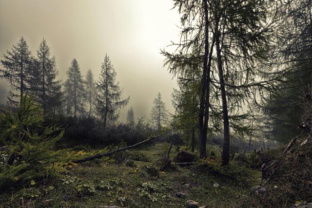 A mystical forest with fog and shining behind trees - fotokunst von Markus Schieder