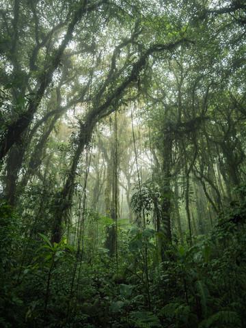 Santa Elena Cloud Forest 2 - fotokunst von Johann Oswald